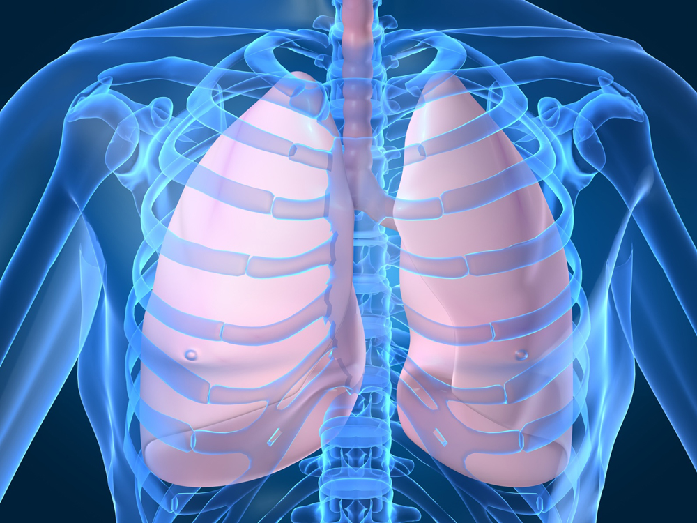 lungs   The Tyranny of Tradition