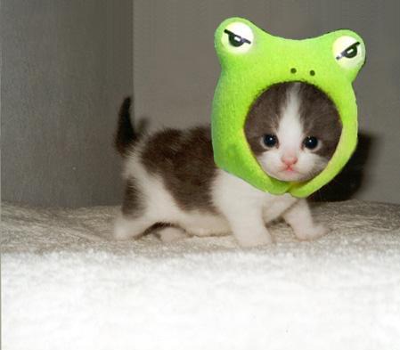 external image cutest-kitten-hat-ever-13727-1238540322-17.jpg