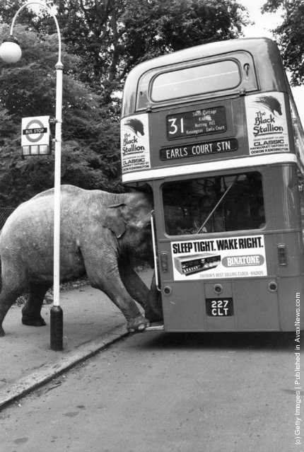 Old-Funny-Photos-of-Elephants-7