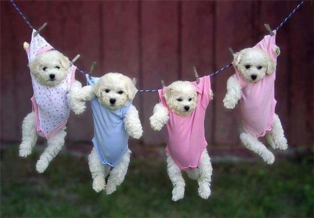 Puppies Hanging on a Clothesline